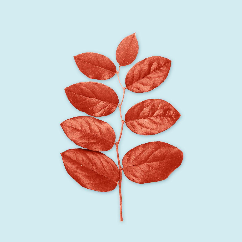https://shahinkarimov.com/portfolio/well-designed-leaf/